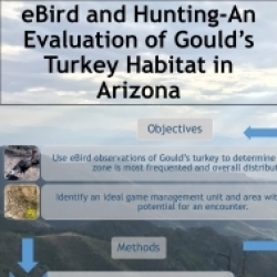 eBird and Hunting- An Evaluation of Gould's Turkey Habitat in Arizona